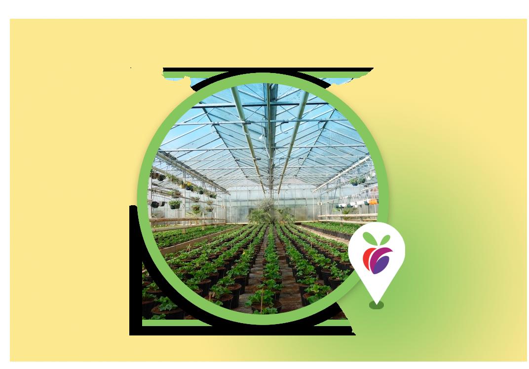 sicilia-serre-verdura-oasi-della-frutta